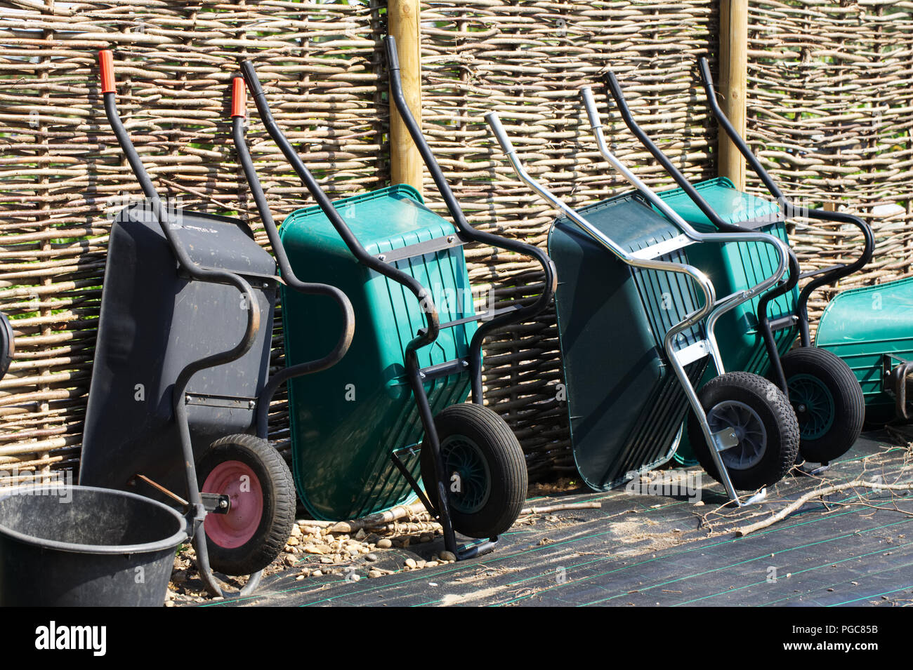 Wheelbarrows lined up against a fence at RHS Wisley allotment gardens. - Stock Image