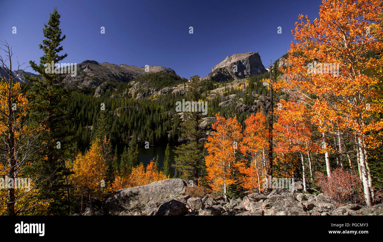 Aspen Trees In Fall Colors At Bierstadt Lake In The Rocky Mountain National Park Colorado Usa Stock Photo Alamy