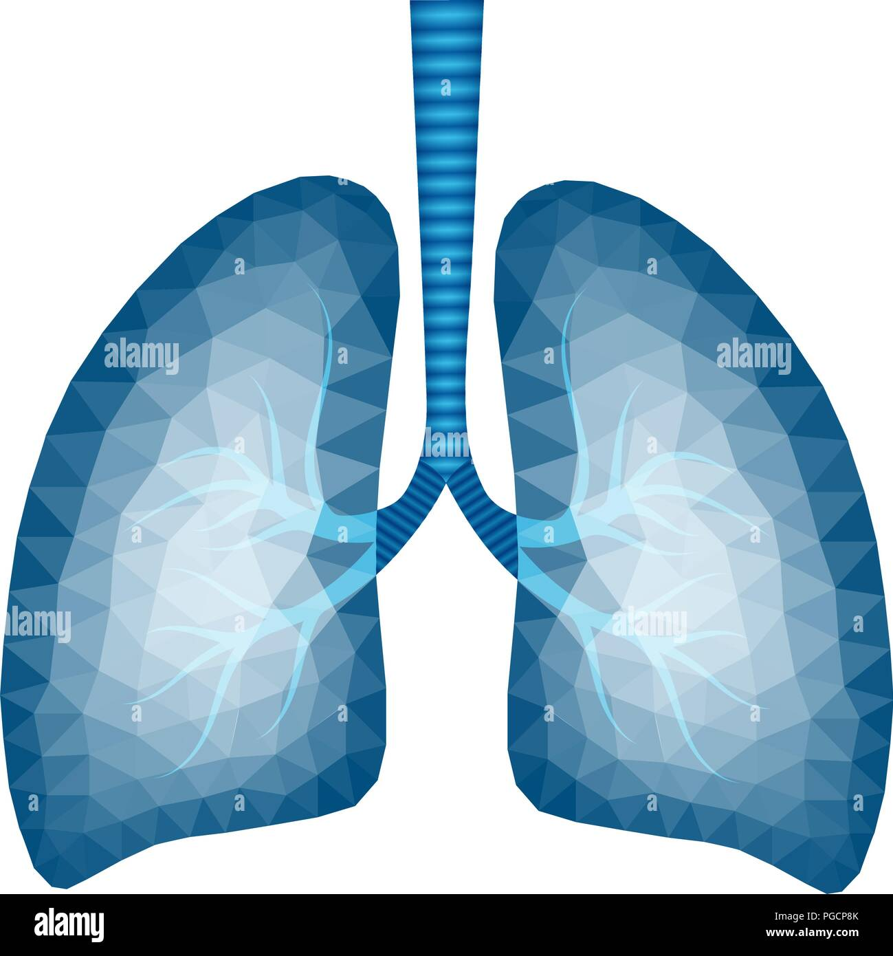 Abstract polygonal image of human lungs in blue tone - vector illustration - Stock Vector