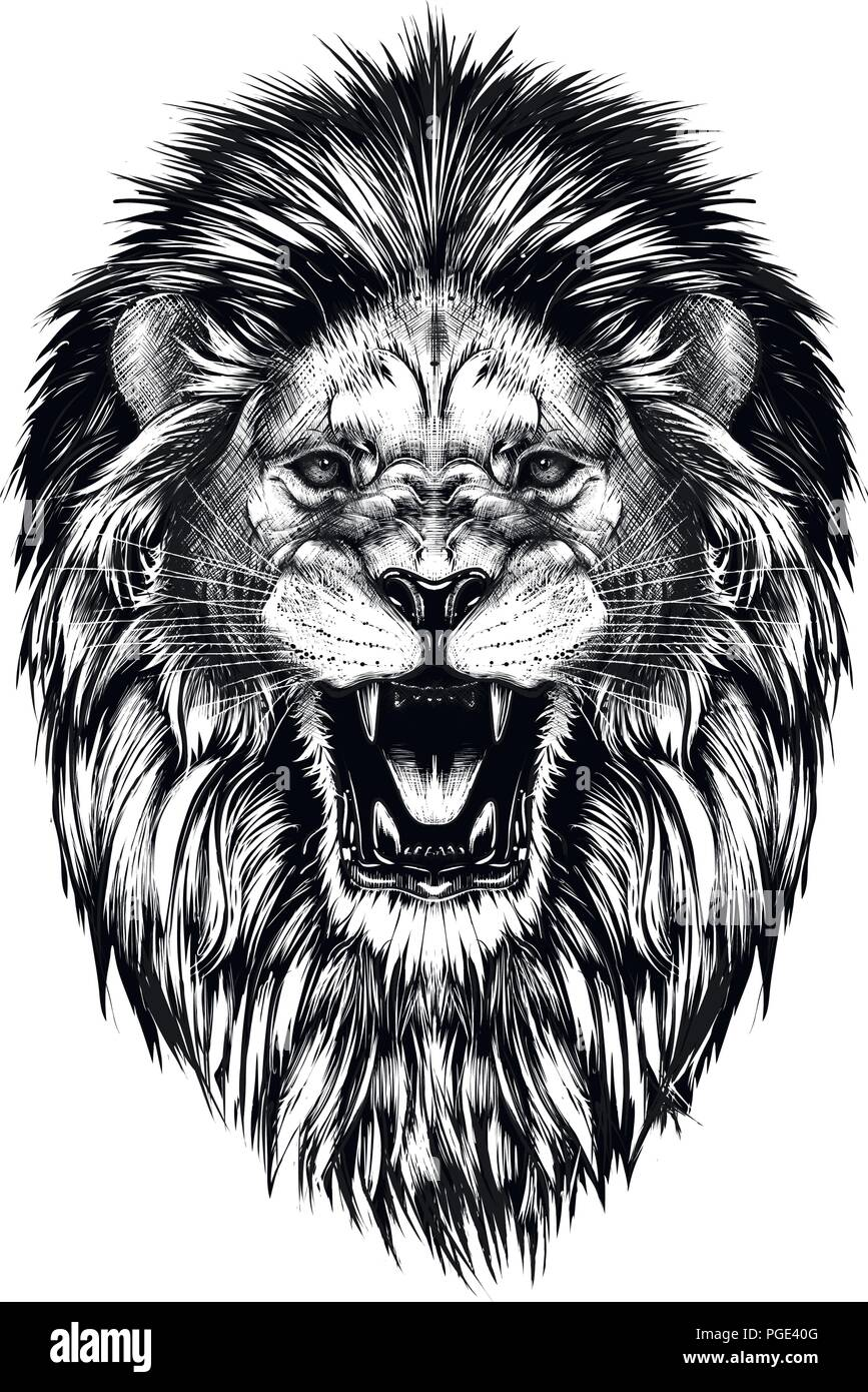 Hand Drawn Sketch Of Lion Head In Black Isolated On White Background Stock Vector Image Art Alamy Roaring lion head outline illustrations & vectors. https www alamy com hand drawn sketch of lion head in black isolated on white background image216669392 html