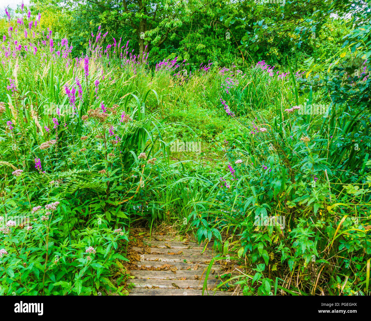 green forest landscape with purple flowers and fully grown with plants - Stock Image