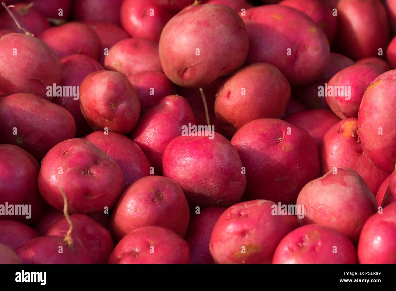 Red potatoes, Salem Saturday Marker, Salem, Oregon - Stock Image