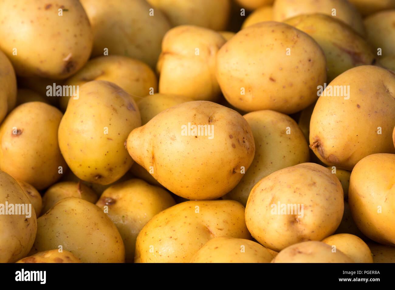 Yukon Gold potatoes, Salem Saturday Marker, Salem, Oregon - Stock Image