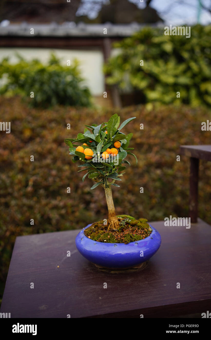 Bonsai Japan High Resolution Stock Photography And Images Alamy