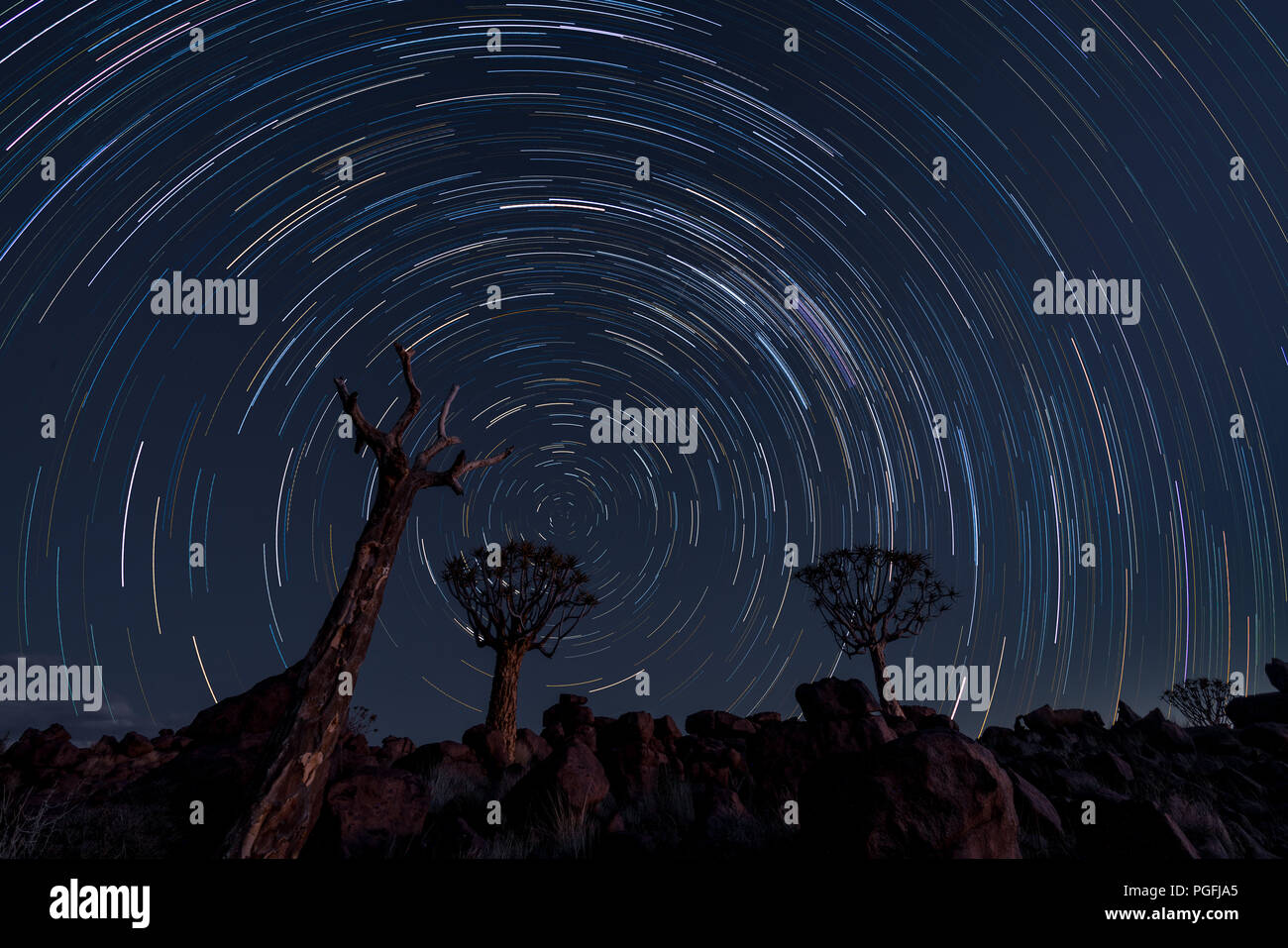 Stsr trails circle over quiver trees in Namibia - Stock Image