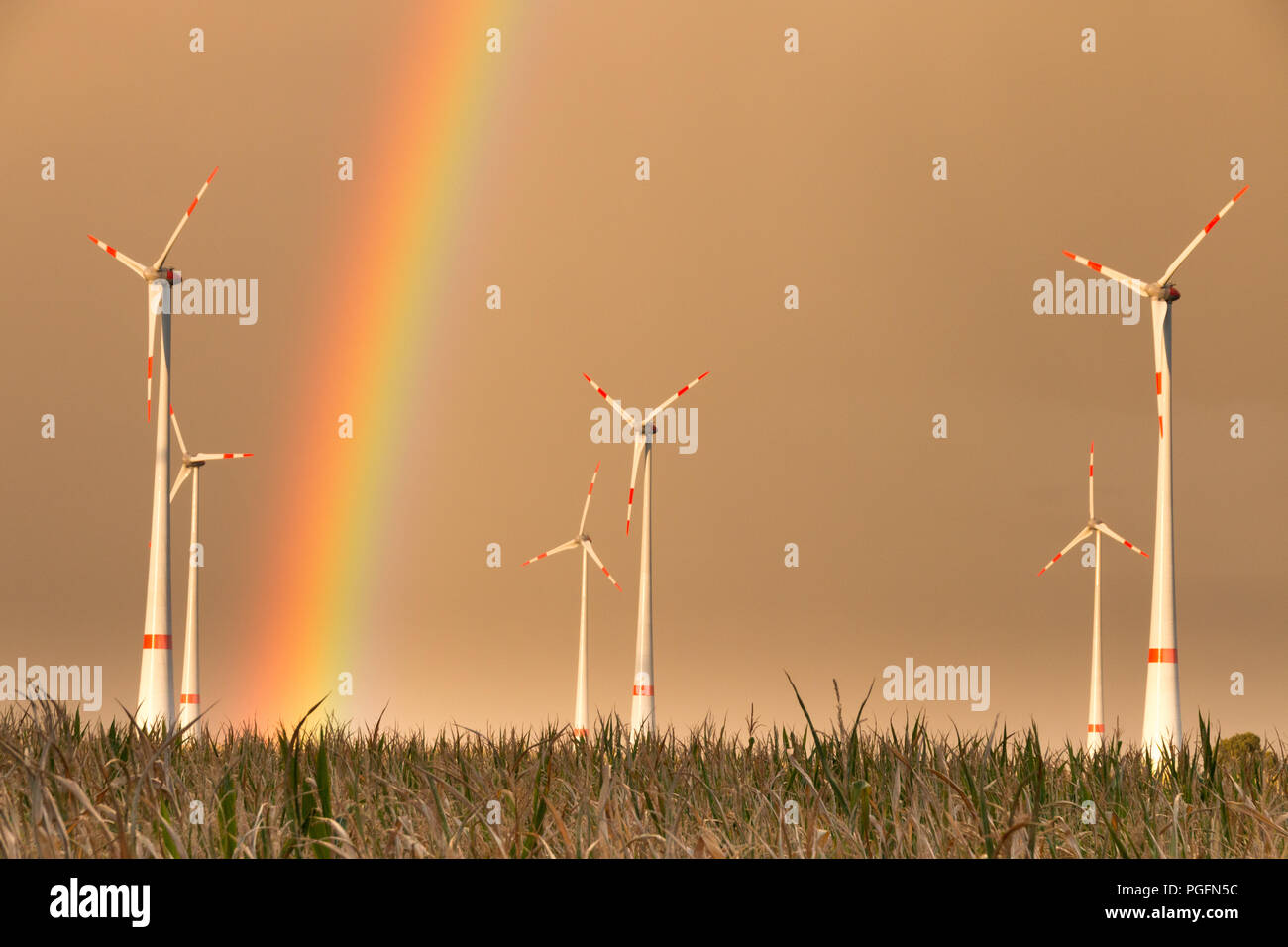 Germany - First storm brings rainbow. TRÜSTEDT, GERMANY - August 25, 2018: The first heavy rain of the season produces a rainbow behind wind turbines on a dry field in Altmark near Trüstedt, Germany. Credit: Mattis Kaminer/Alamy Live News Stock Photo