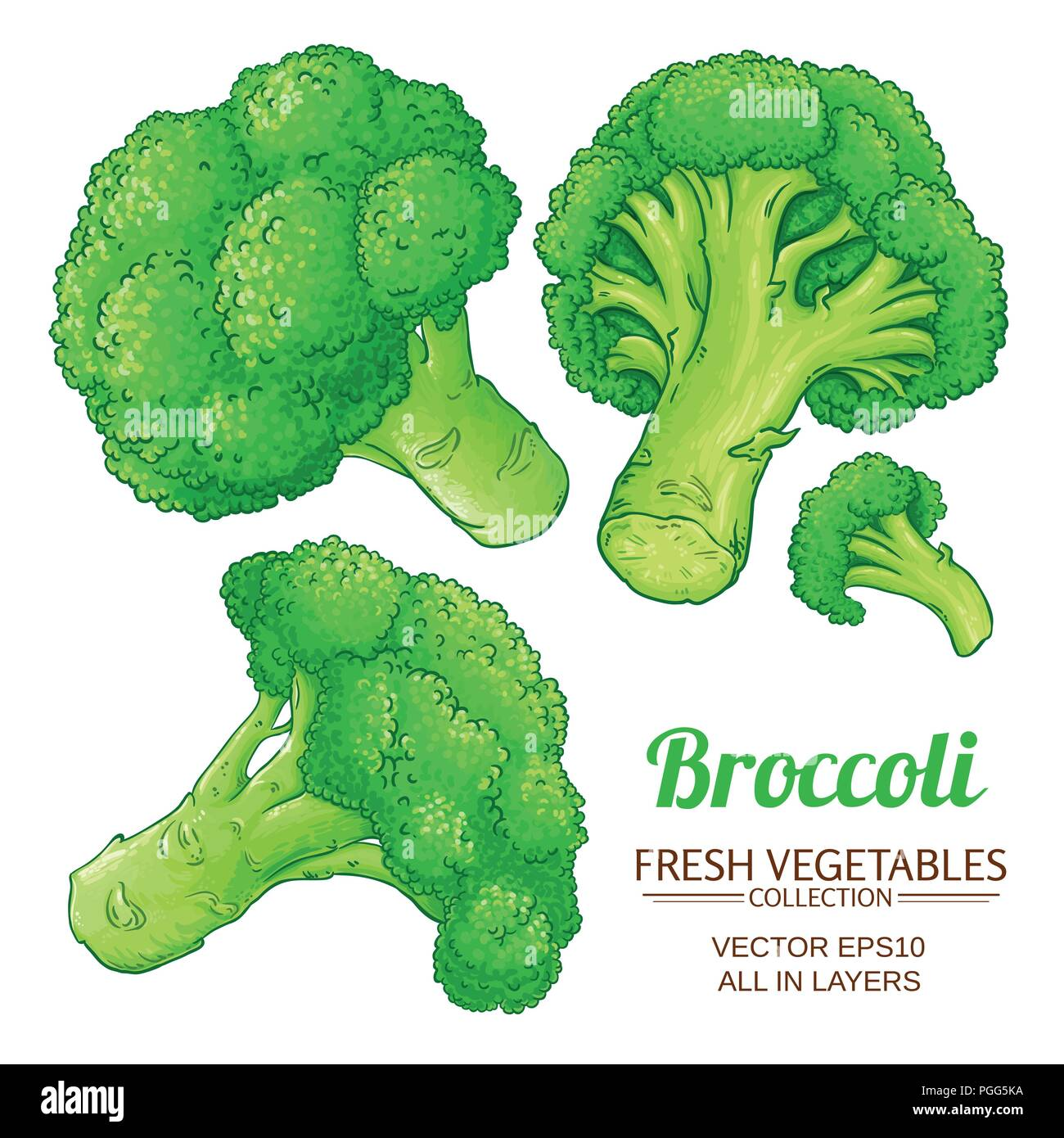 broccoli vector set on white background stock vector image art alamy https www alamy com broccoli vector set on white background image216714606 html