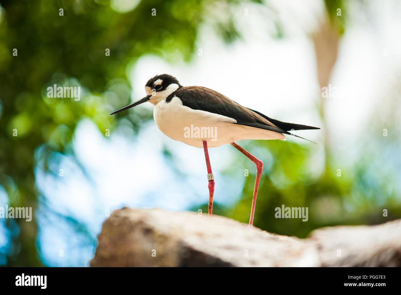 wildlife park - Stock Image