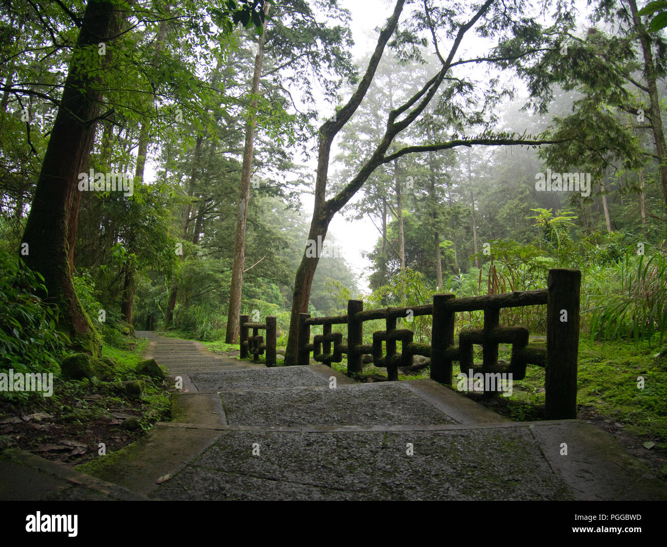 Misty Green Forest Nature River Beautiful 1ziw: Taichung Stock Photos & Taichung Stock Images