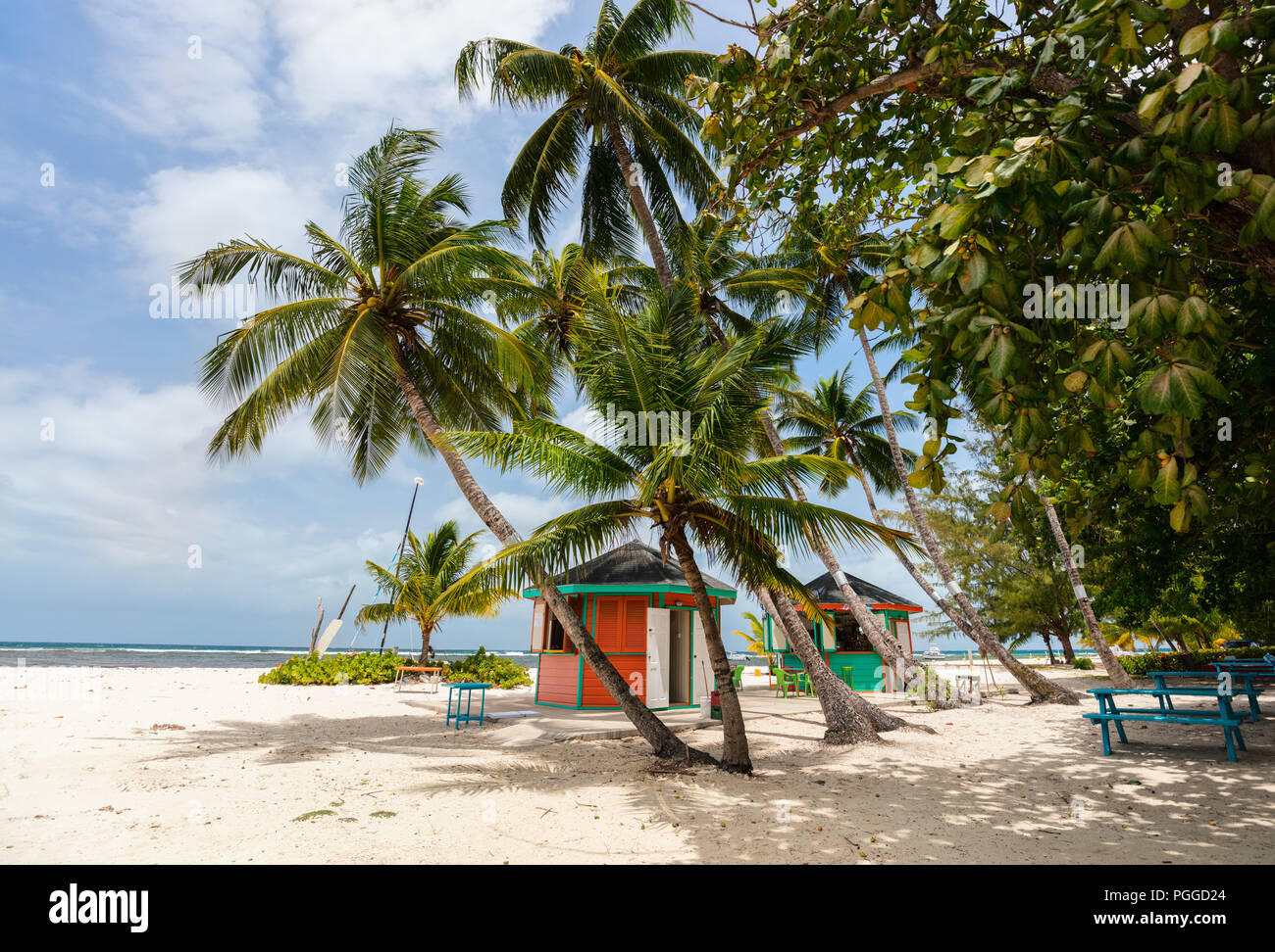 Idyllic tropical beach with white sand, palm trees and turquoise ocean water on Barbados island in Caribbean - Stock Image