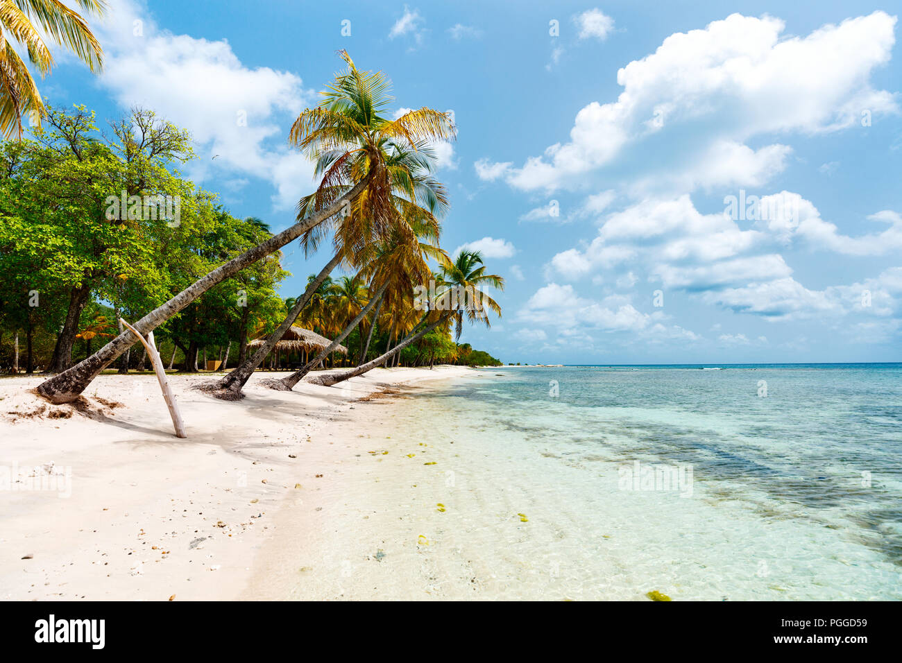 Idyllic tropical beach with white sand, palm trees and turquoise Caribbean sea water on Mustique island in St Vincent and the Grenadines - Stock Image