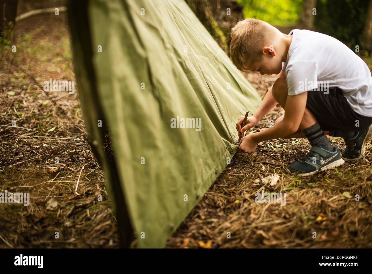 Boy pegging out poncho to make shelter in the woods - Stock Image