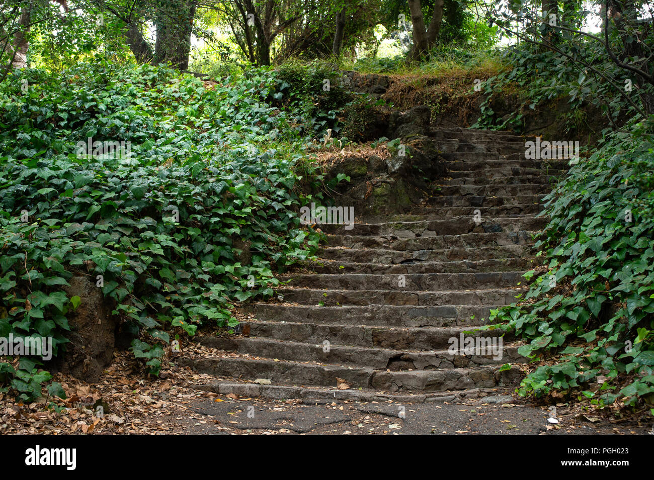 Lush ivy and greenery lines the Short Cut stairs in Berkeley, CA. Stock Photo