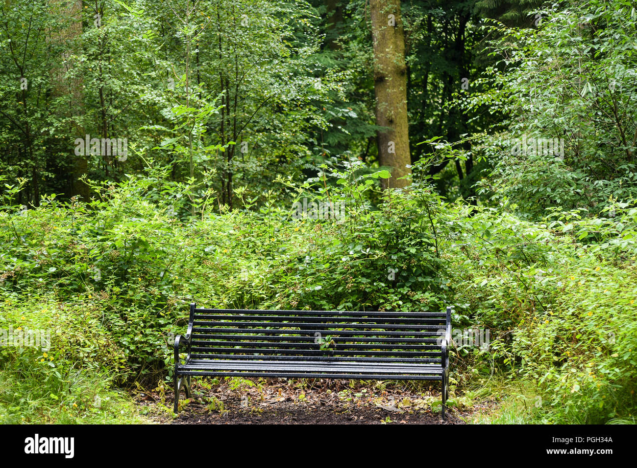 Stupendous A Bench In The Secret Garden In Balloch Park Into The Loch Andrewgaddart Wooden Chair Designs For Living Room Andrewgaddartcom
