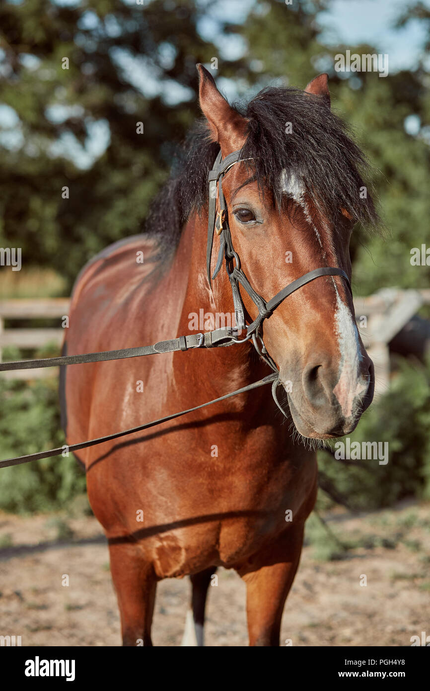 Beautiful Brown Horse Close Up Of Muzzle Cute Look Mane Background Of Running Field Corral Trees Horses Are Wonderful Animals Stock Photo Alamy
