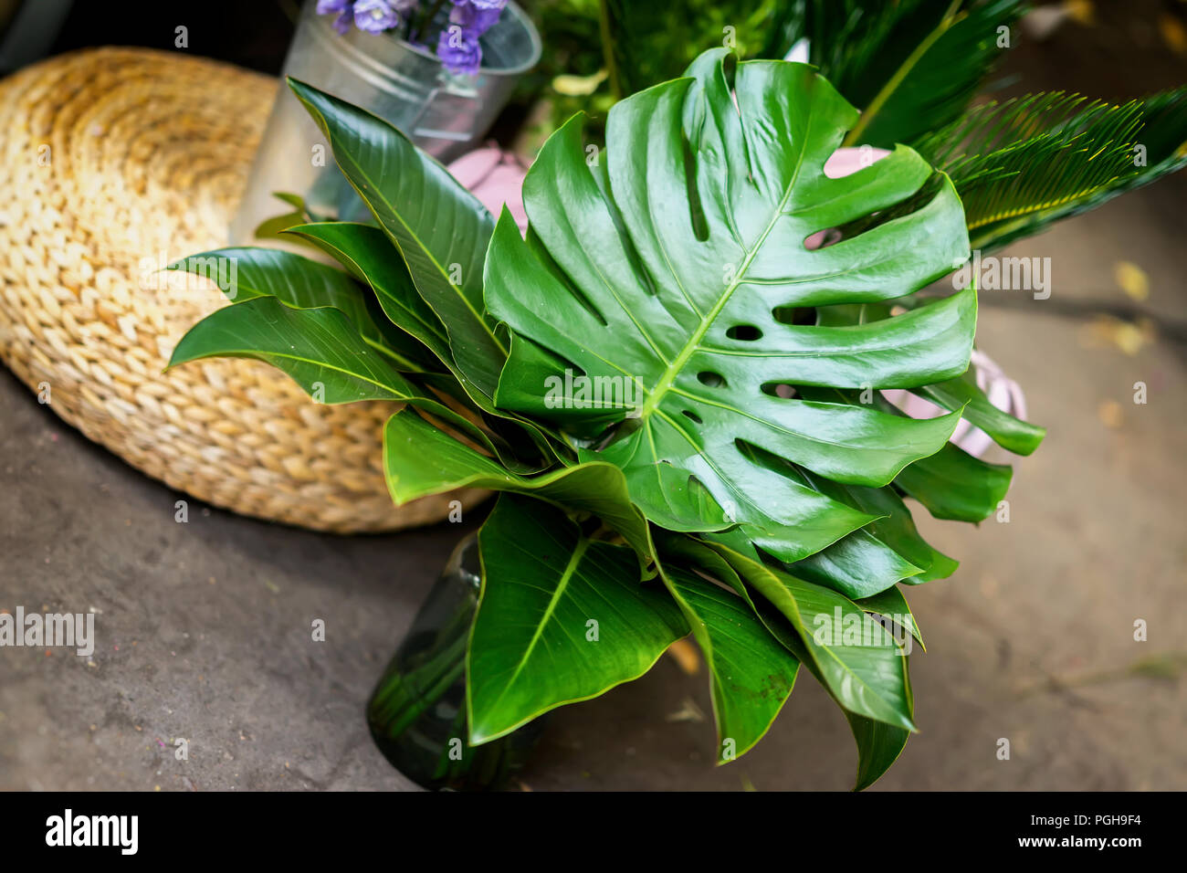 Bouquet of fresh monstera, green tropical leaves in glass vase, diagonal background - Stock Image