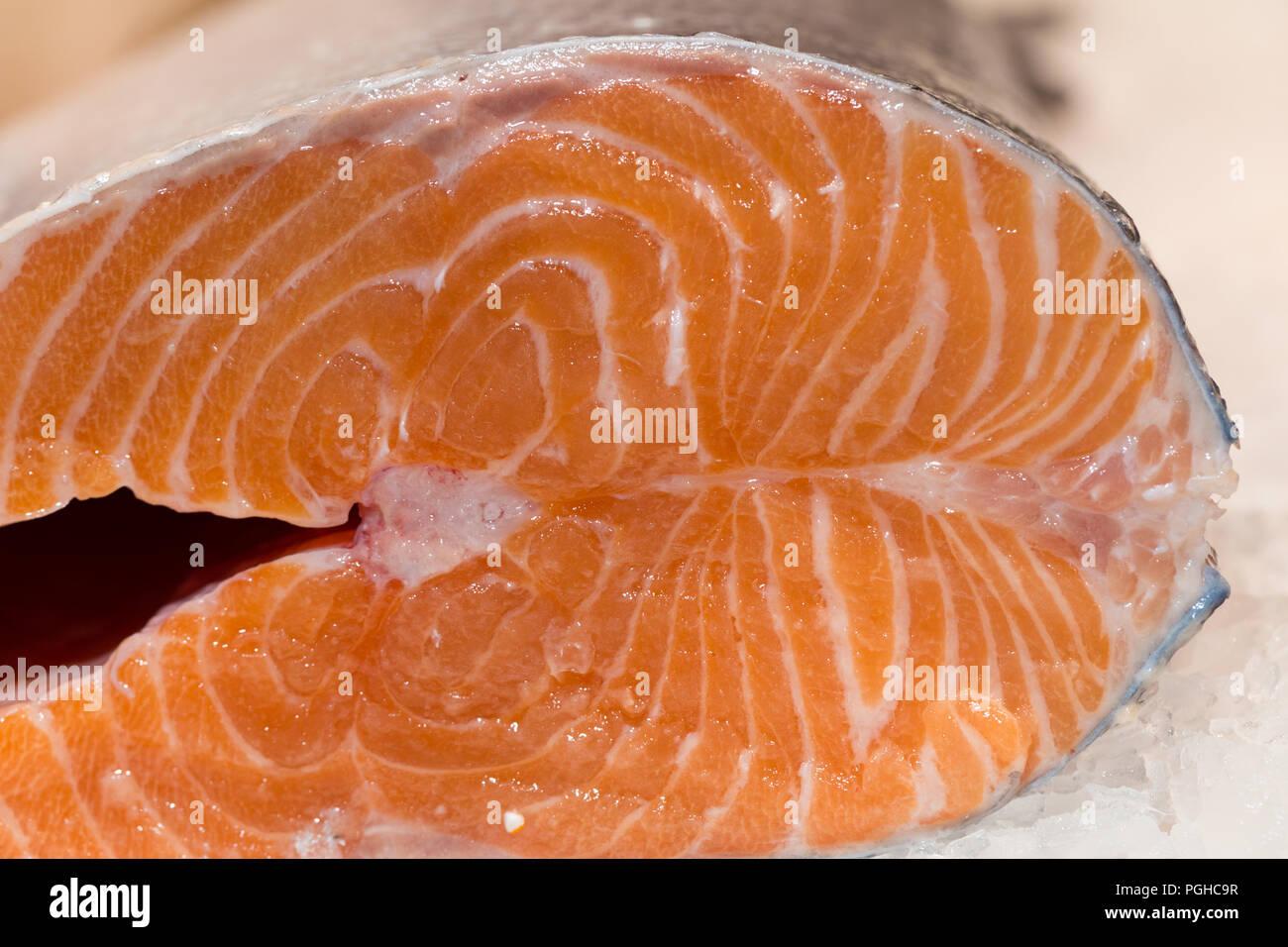 Fresh Atlantic salmon in ice - Stock Image