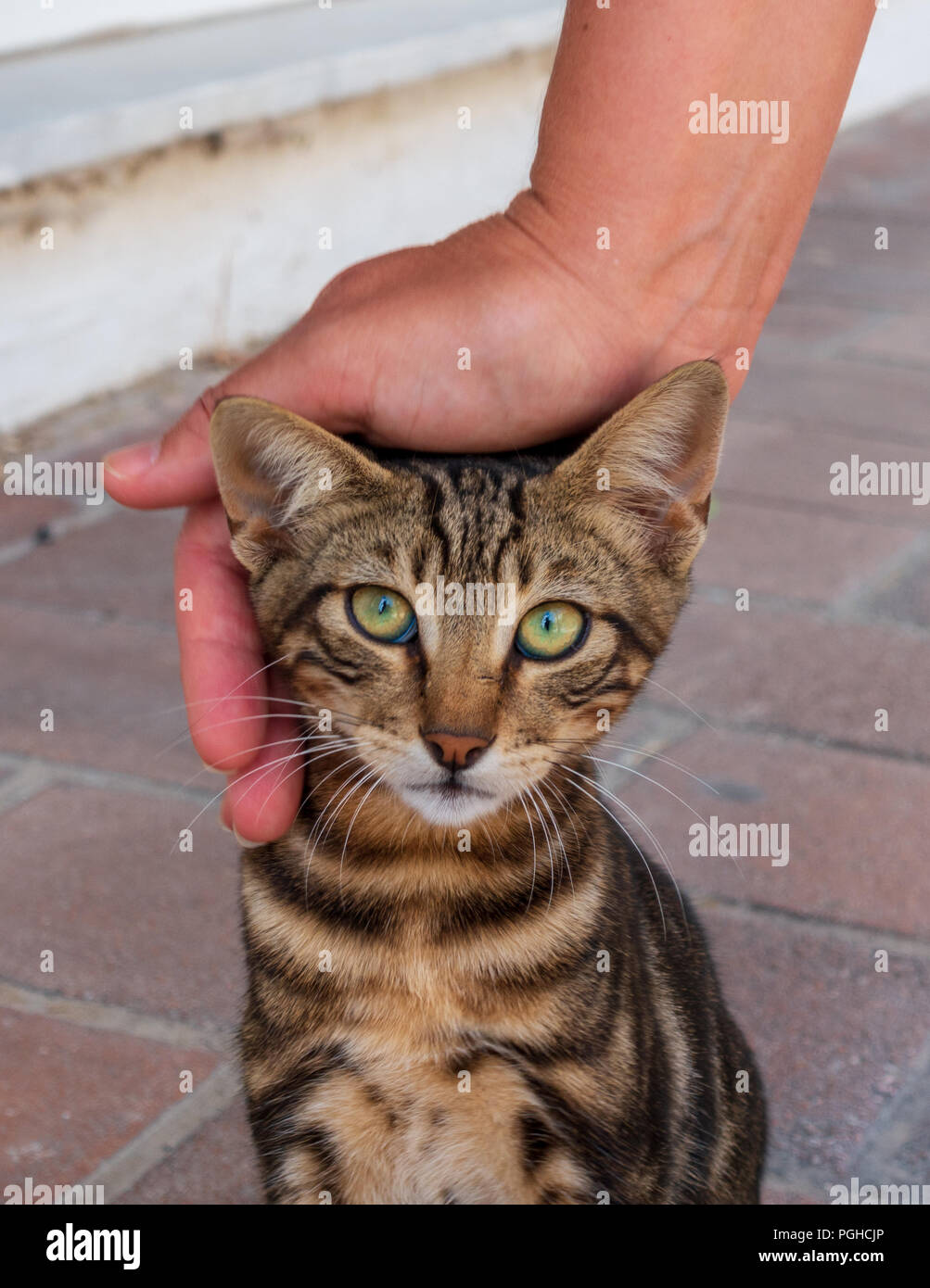 Street cat being stroked in Greece Stock Photo
