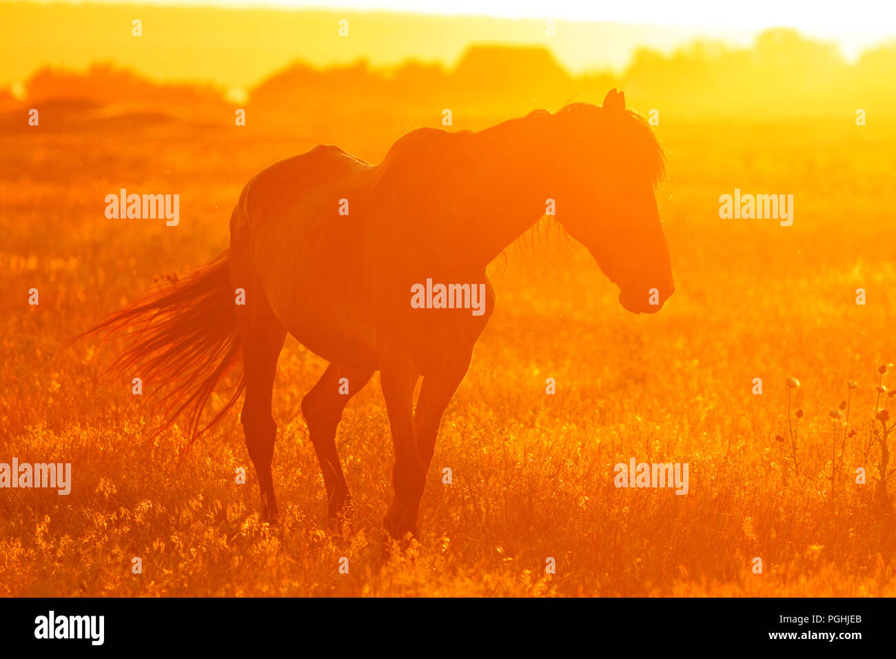 Silhouette of a horse in the field at sunset - Stock Image