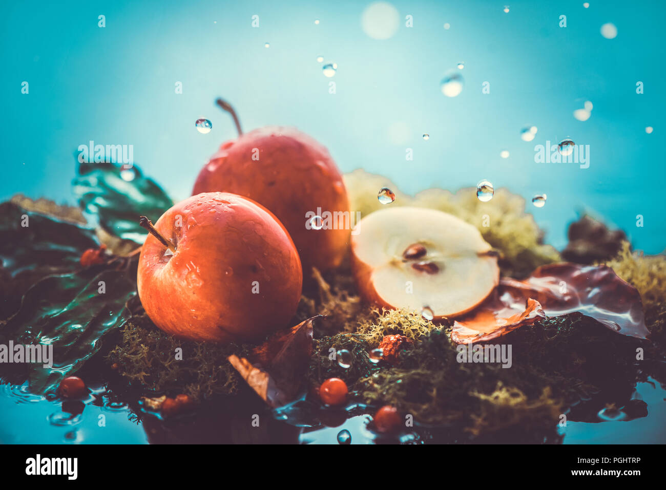 Autumn apples under rain still life. Fall harvest header with water drops and copy space. Red small ranet apples and fallen leaves. Cross process effect - Stock Image