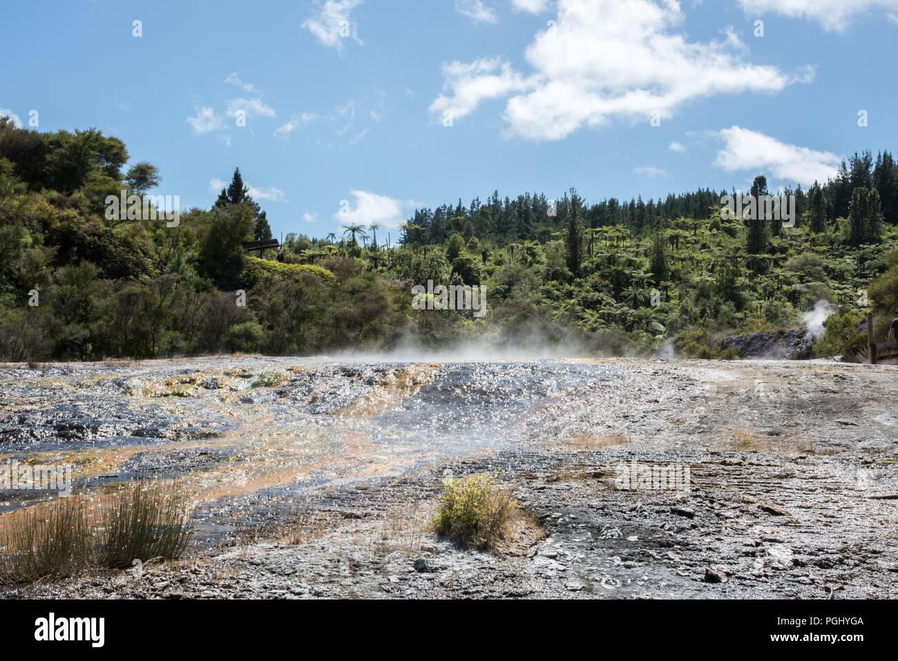 Steaming microbial mats at Orakei Korako in Rotorua, New Zealand - Stock Image