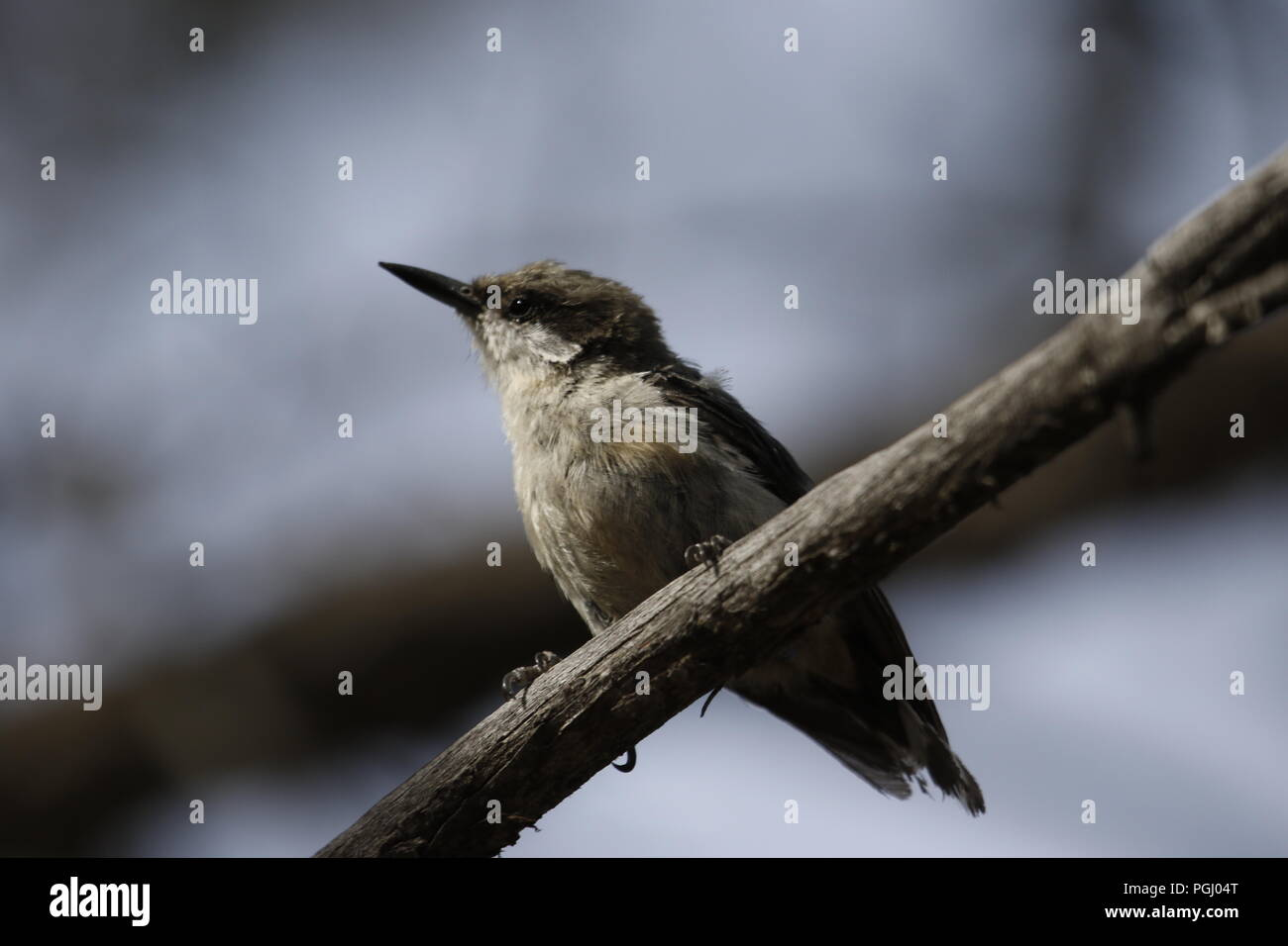 Wild Birds in their natural surrounds - Stock Image