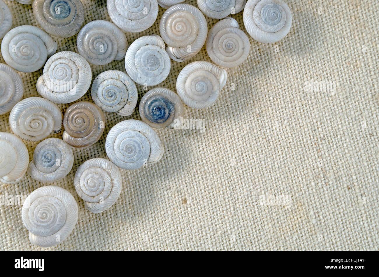 Tiny snail shell arrangement on khaki fabric, close-up/macro shot. Photo Two. - Stock Image