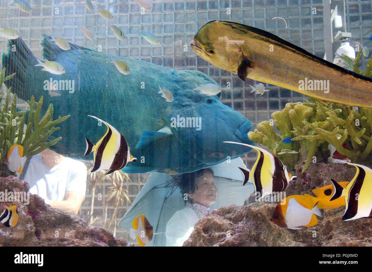 Shoppers In Ginza Look At Tropical Fish Displayed A Large Tank Sony Aquarium 2018 The Park Tokyo On Saturday August 25