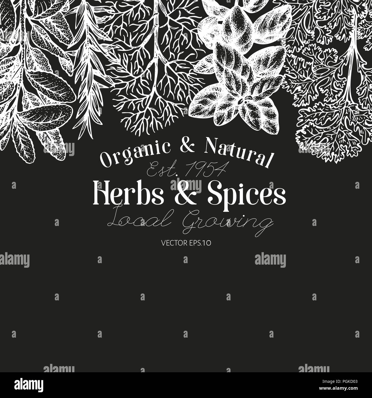 culinary herbs and spices banner template vector background for