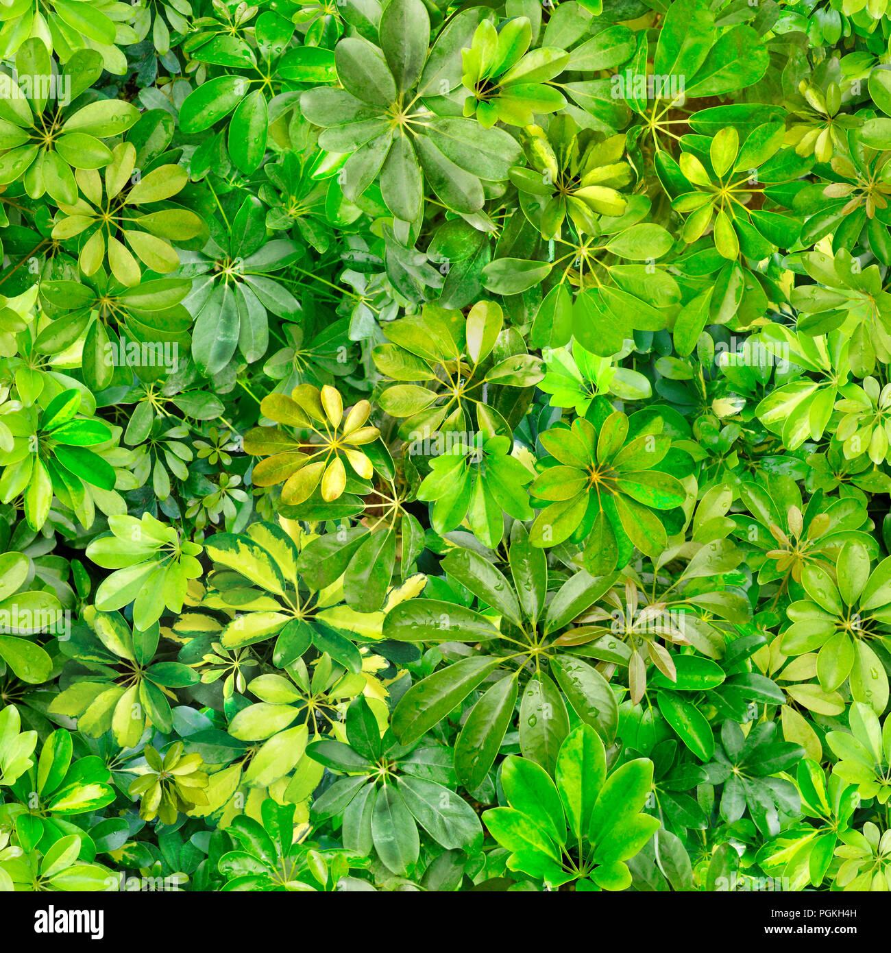 Seamless Pattern Leaves Summer Green Heat Flora
