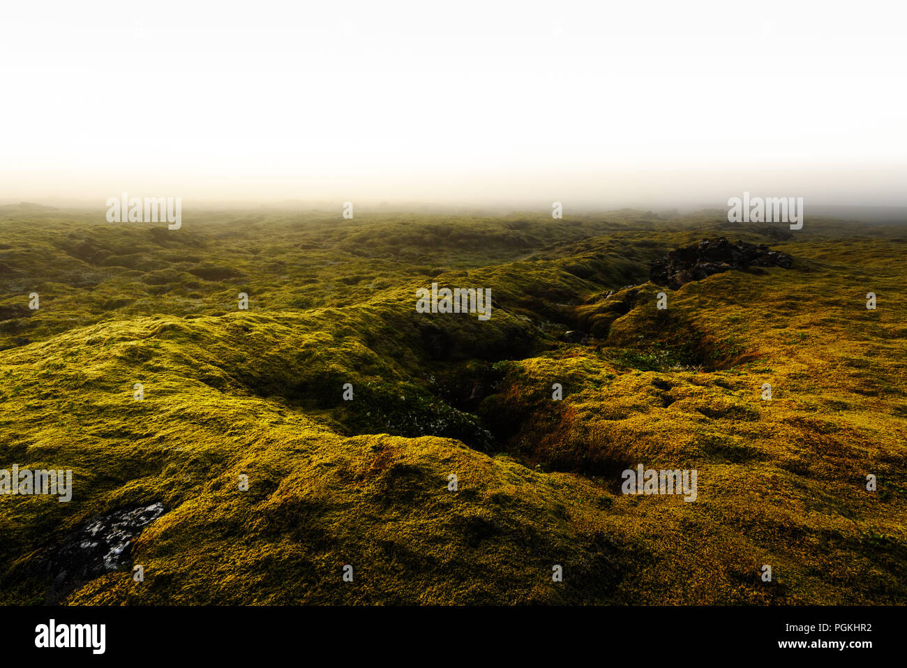 Moss field in Iceland - Stock Image