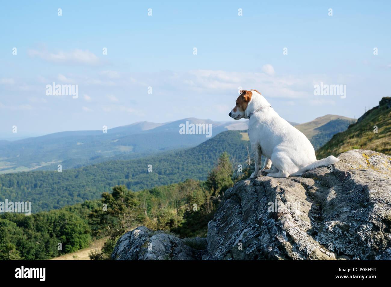 Alone white dog sitting on rock - Stock Image