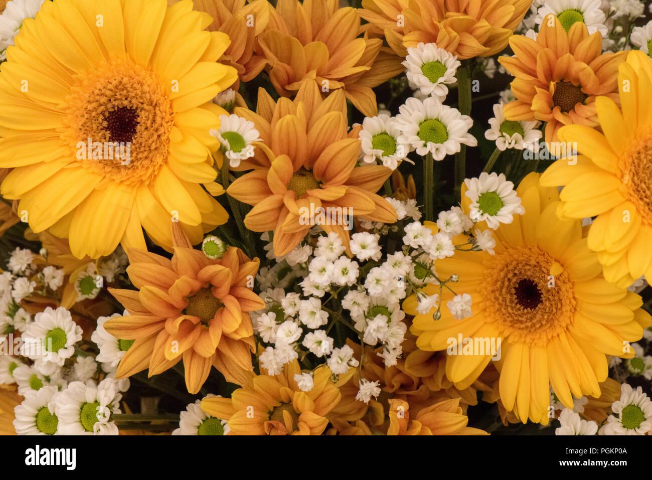 Beautiful flower display of yellow gerbera, golden and white chrysanthemums - Stock Image