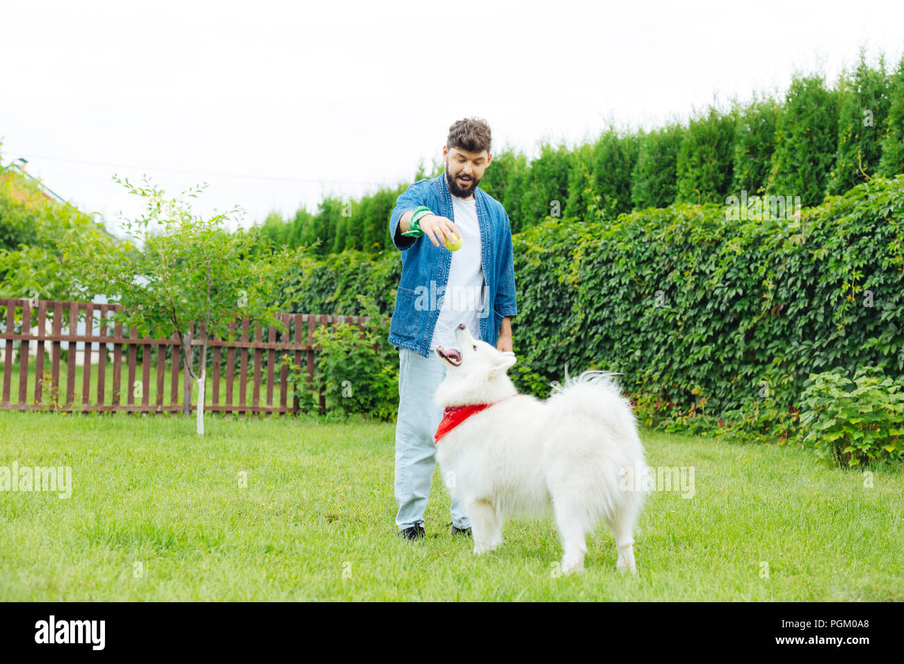 Stylish man wearing jeans jacket playing with white husky - Stock Image