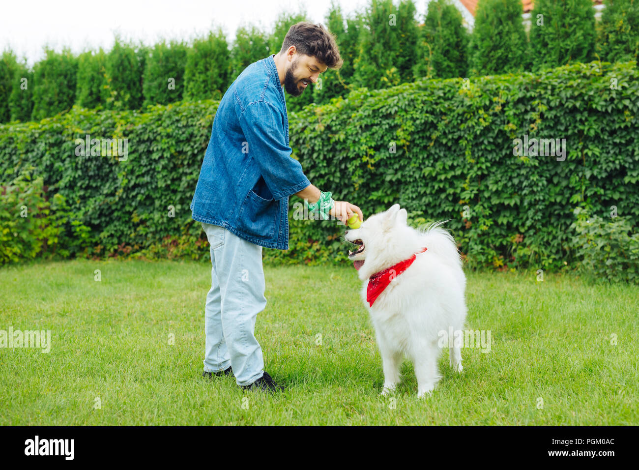 Caring owner of husky taking little ball while playing with pet - Stock Image