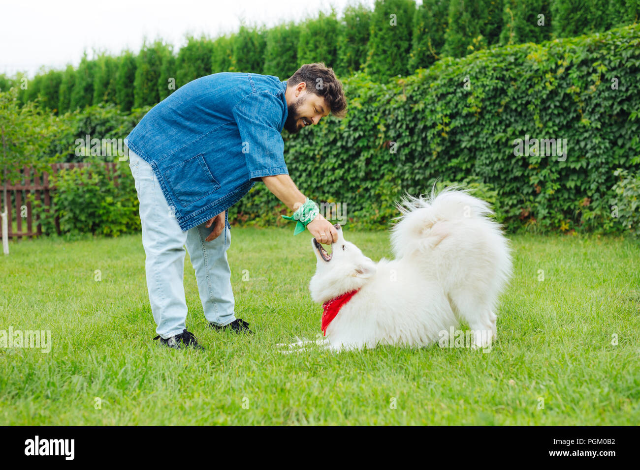 Cute white fluffy husky playing with his handsome owner - Stock Image