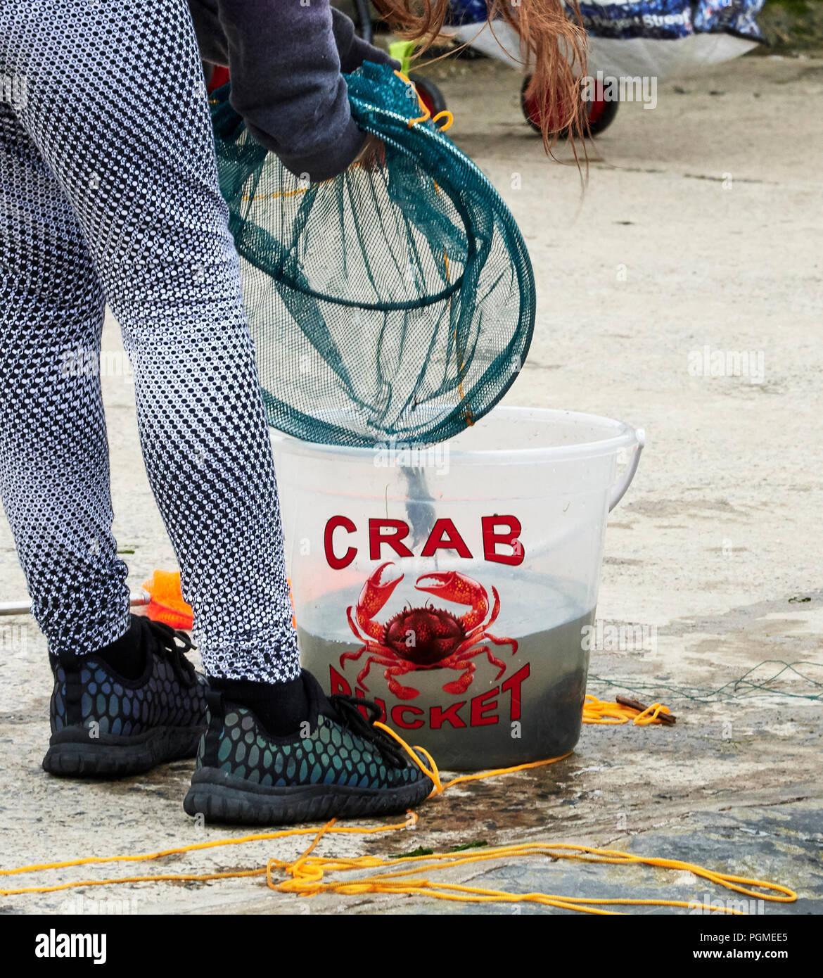Crab Fishing at Aberaeron Harbour - Stock Image