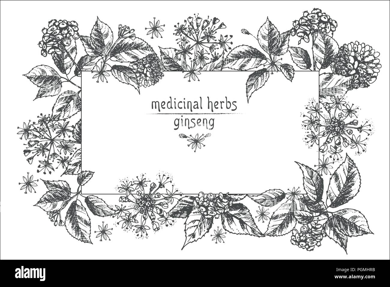 Traditional Chinese Medicine Pharmacy Stock Vector Images Alamy
