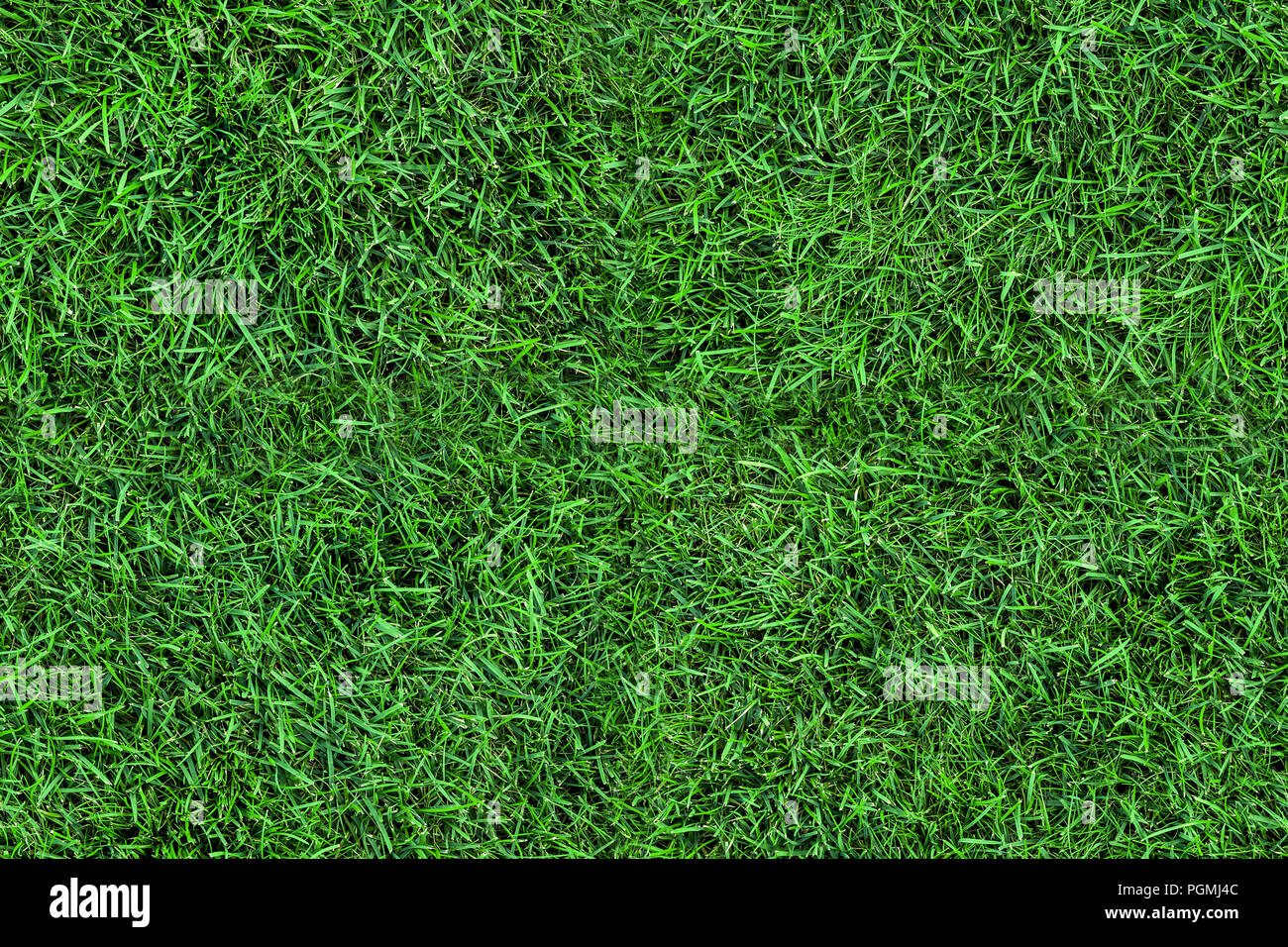 grass field from above. Dark Seamless Green Grass Texture Background. Fresh Lawn Field View Frim  Above From Y