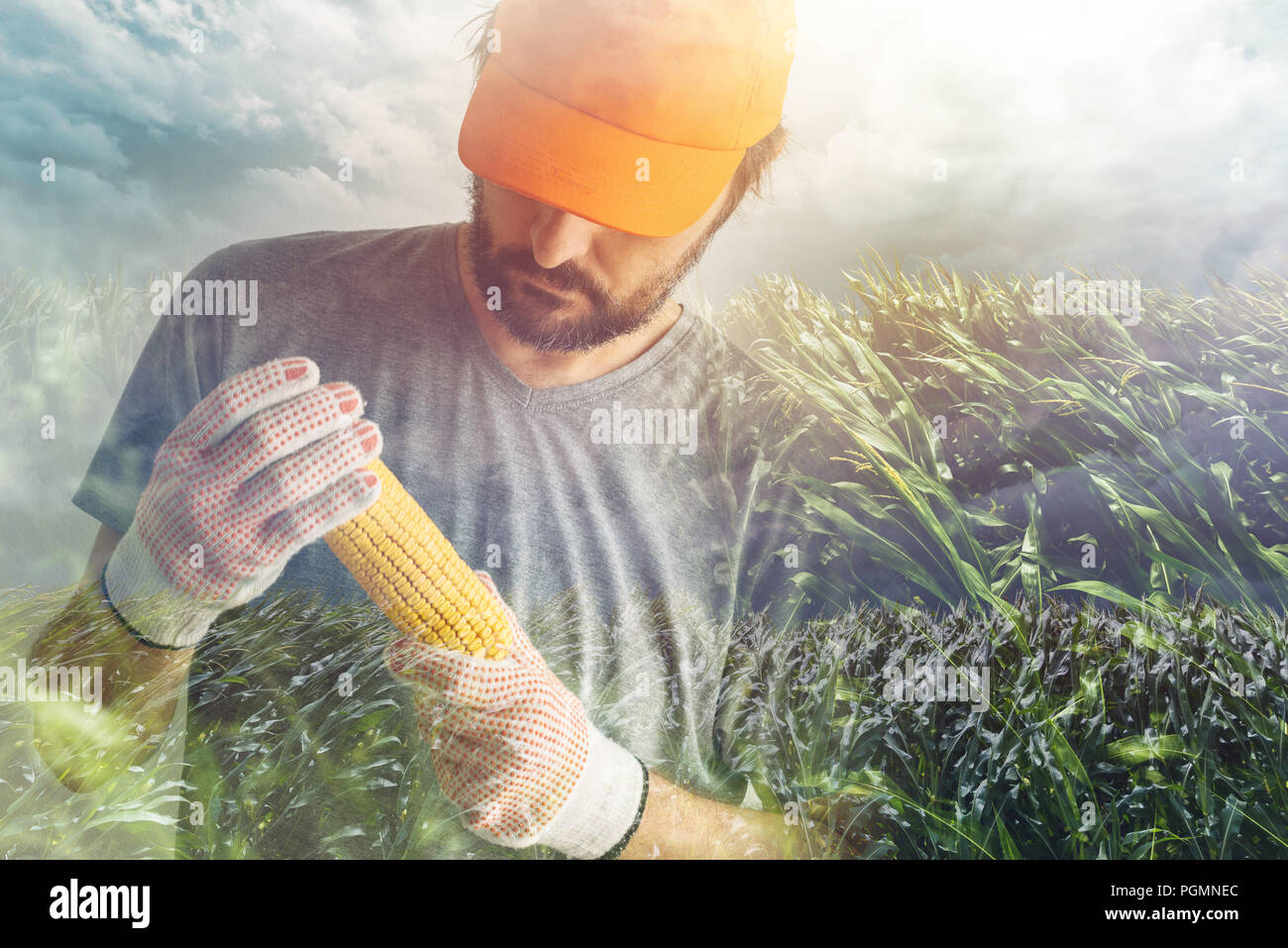 dbb961efbe0 Proud authentic farmer posing with corn on the cob produced in his own  cultivated field