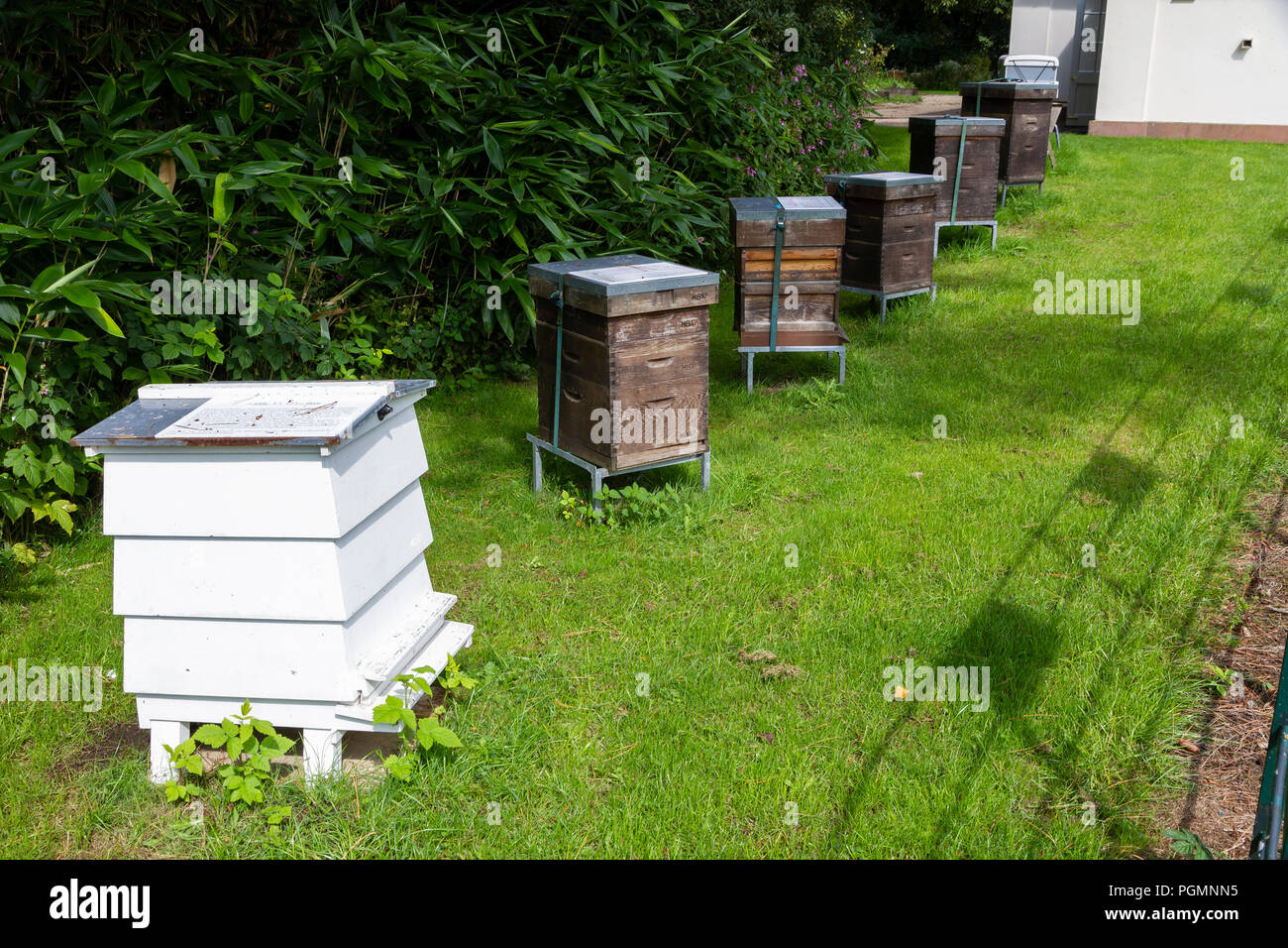 Beehives outside Dower House, Heaton Park, home to the Manchester and District Beekeepers Association. - Stock Image