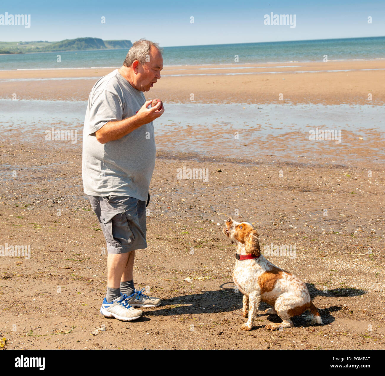 Man with happy cocker spaniel dog playing   on beach , Ayr, a popular seaside resort in South Ayrshire, Scotland, UK - Stock Image
