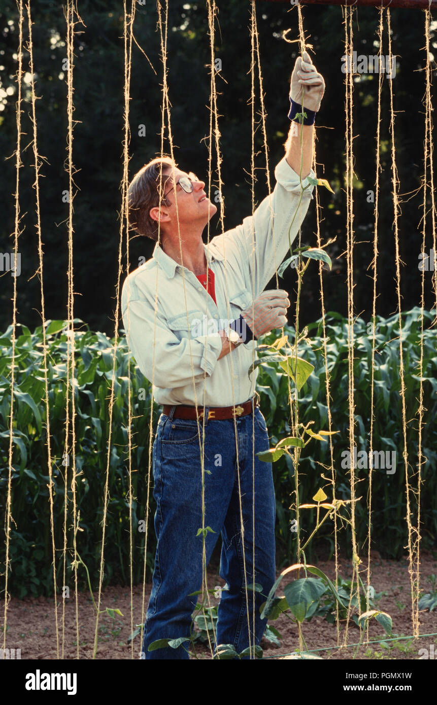 Middled Aged Man Enjoying A Home Garden Pa Usa Stock Photo