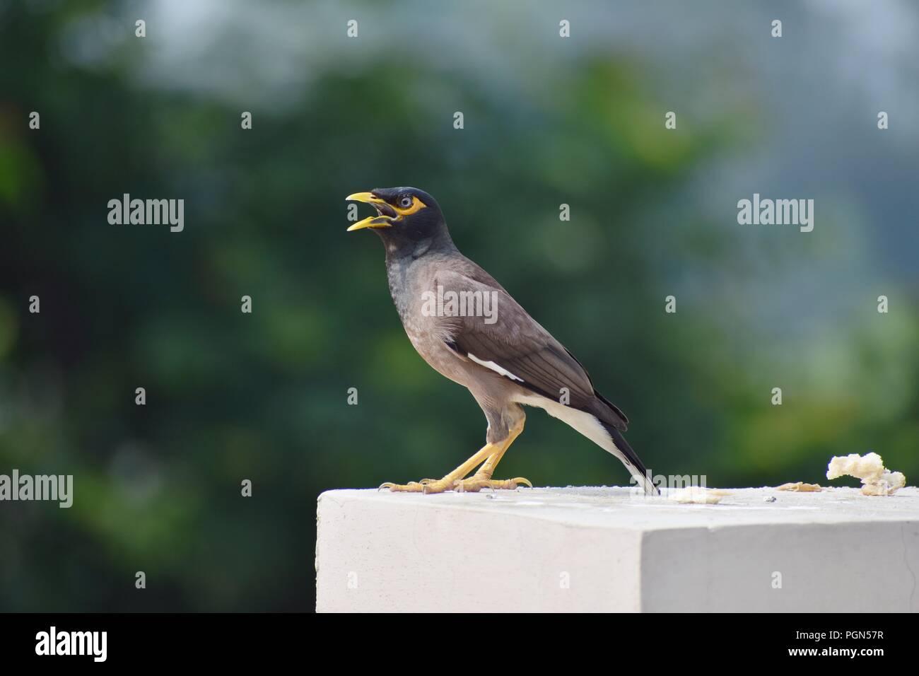 bird chirping stock photo 216824043 alamy