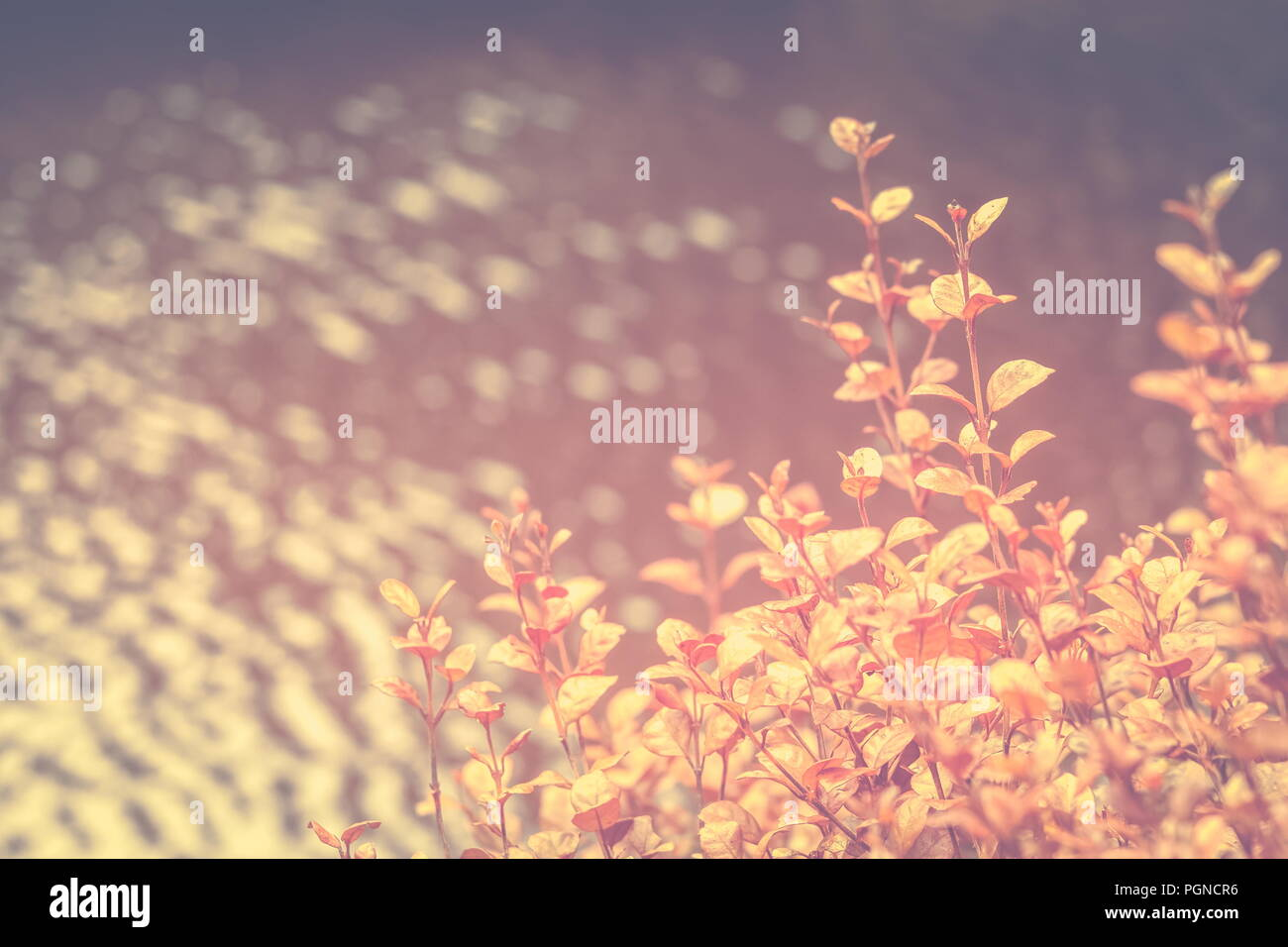 Background nature image with copy space in muted orange tones - Stock Image