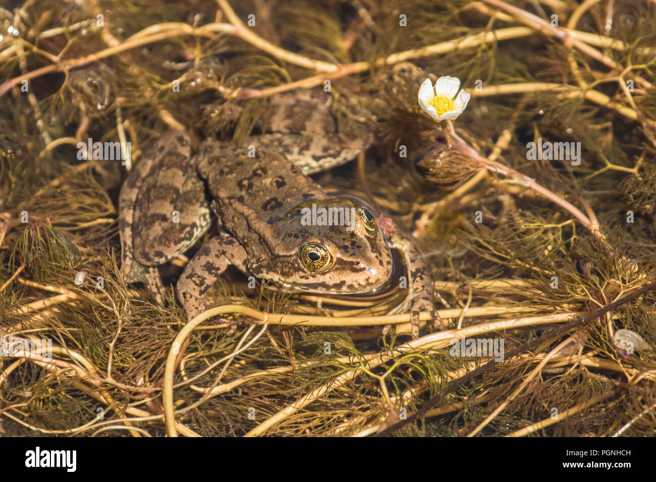 Spotted Frog Waiting for Lunch Stock Photo