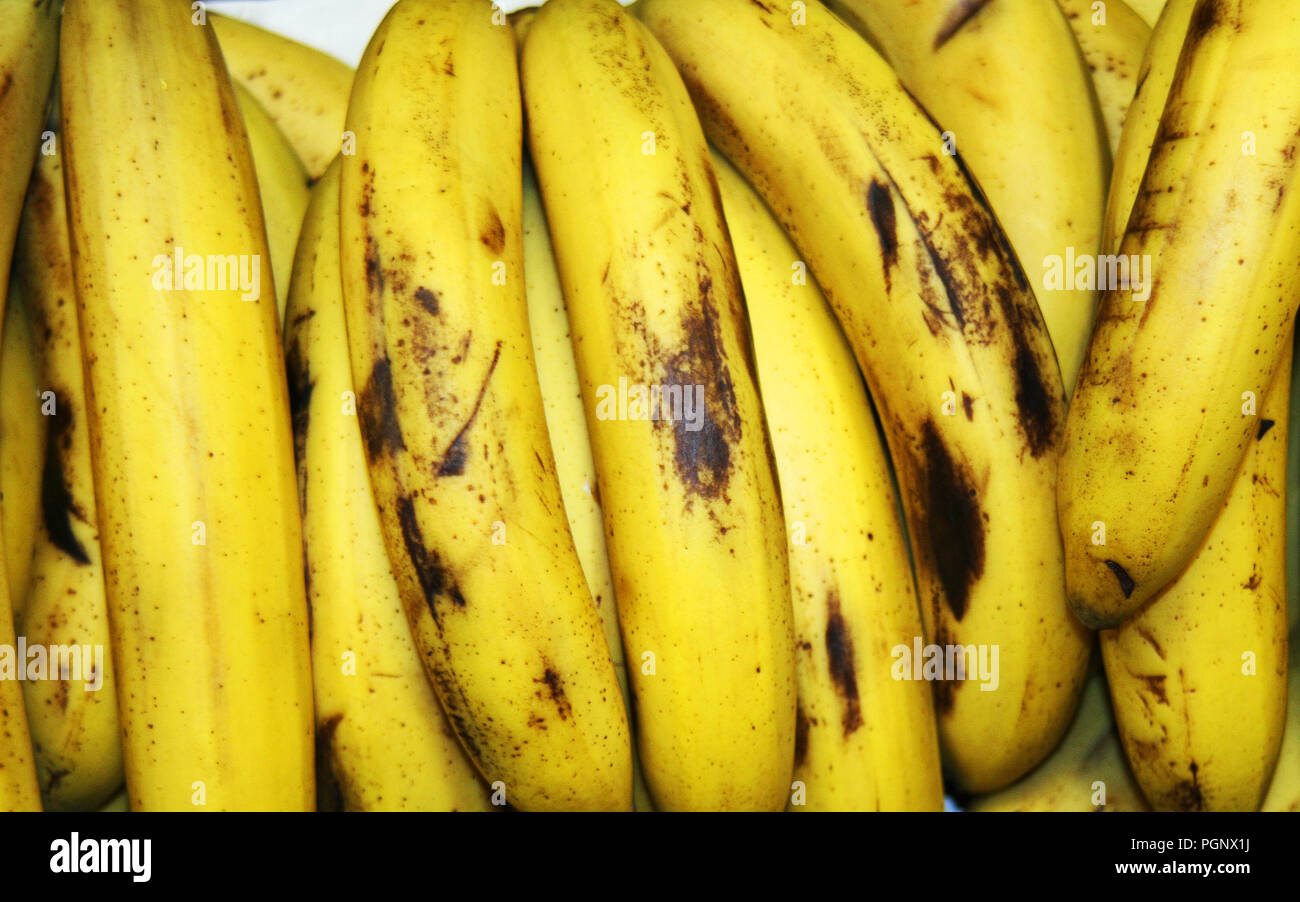Lot of Bananas in Group at the Grocery. Banana is an edible fruit botanically a berry produced by several kinds of large herbaceous flowering plants i Stock Photo