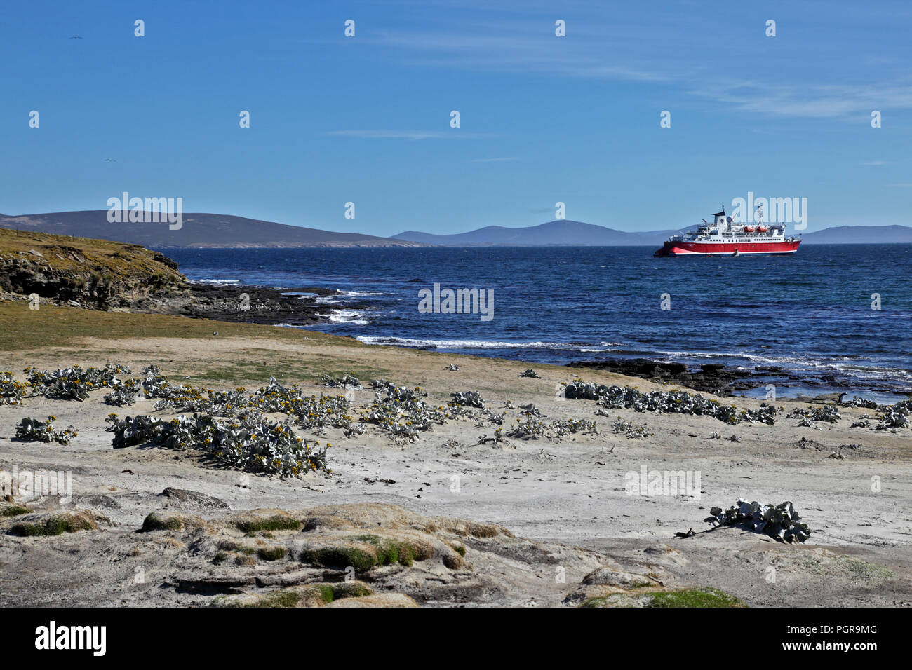MS Expedition Passenger Ship seen from the beach at Saunders Island, the Falklands, Southern Ocean - Stock Image