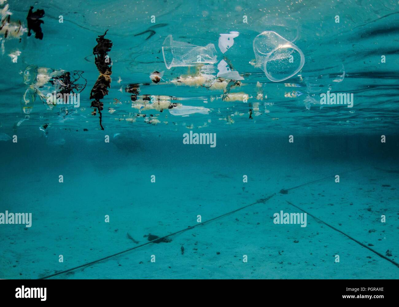 Underwater plastic pollution floating on the surface of the ocean in Egypt - Stock Image