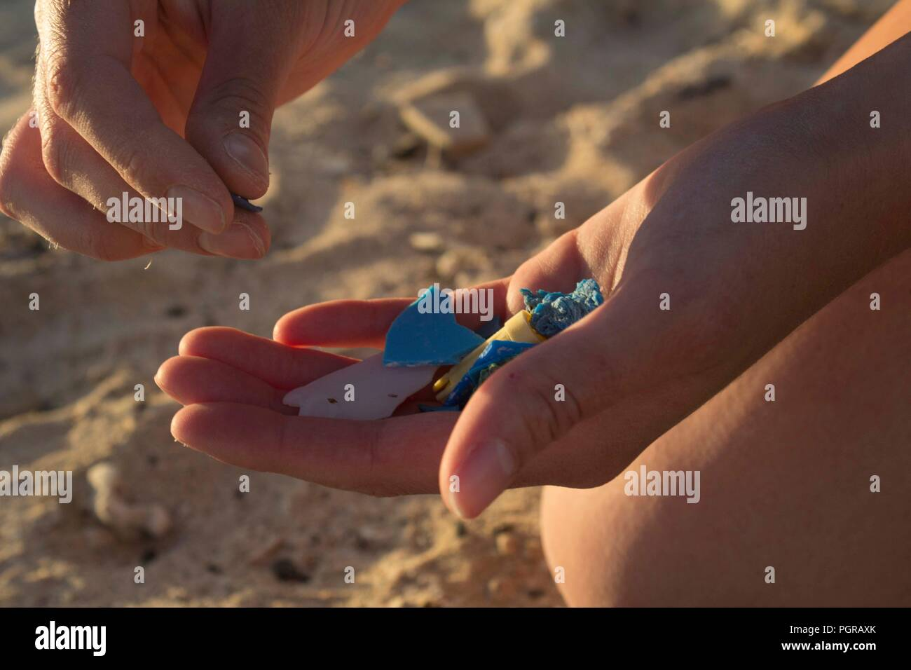 A handful of microplastics during a beach clean in Egypt - Stock Image